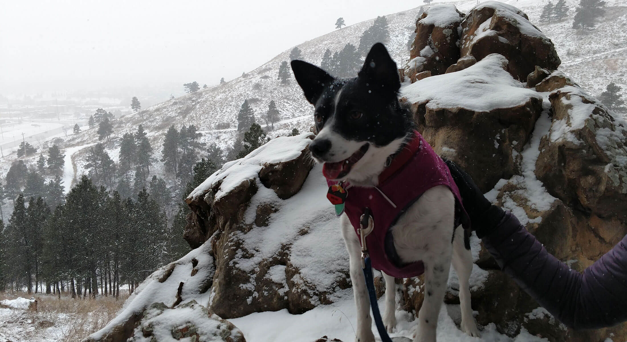 Dog Enjoying a Hike At Hanson-Larsen in Rapid City