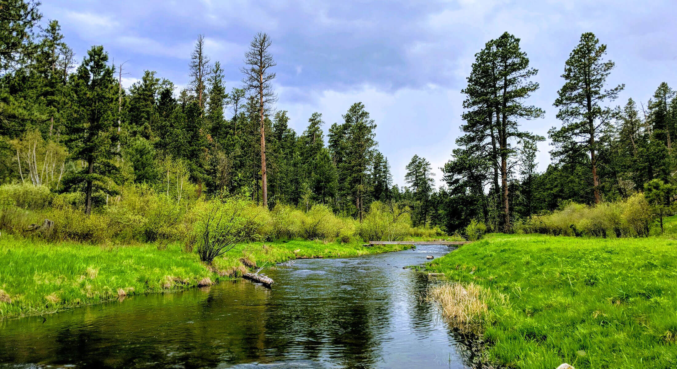 Spring Creek in the Black Hills National Forest