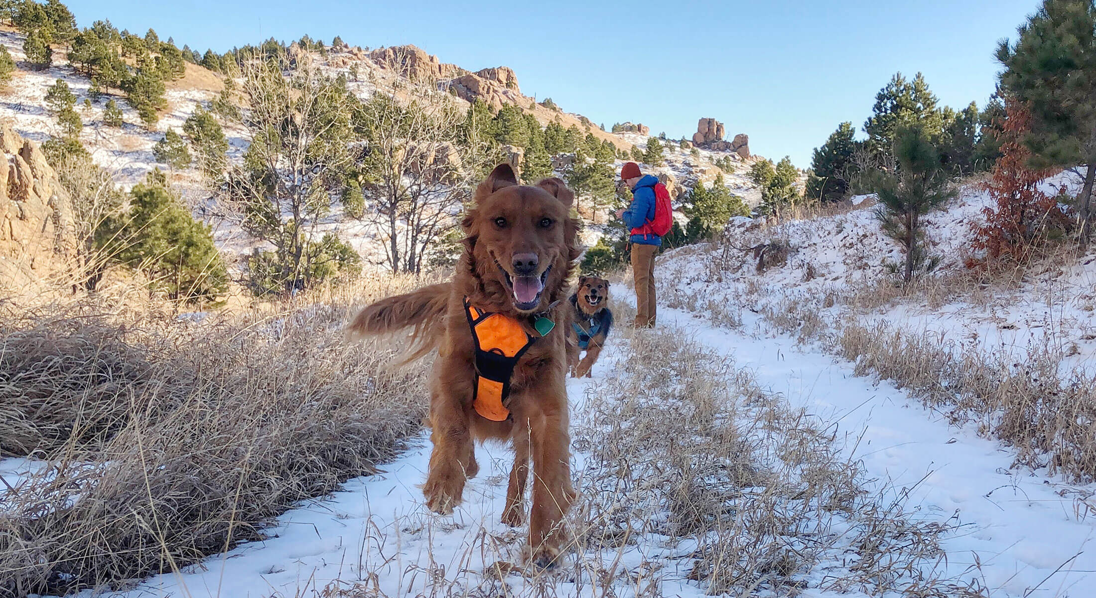 Dogs hiking in Custer State Park during the winter