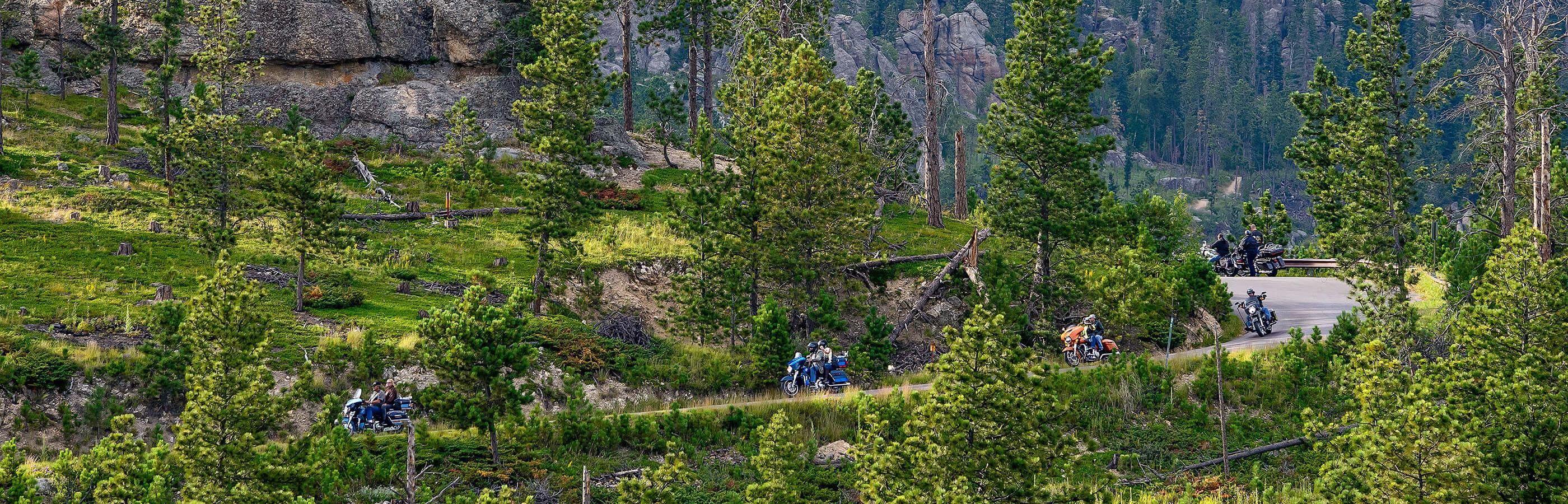Cruising in the Black Hills National Forest
