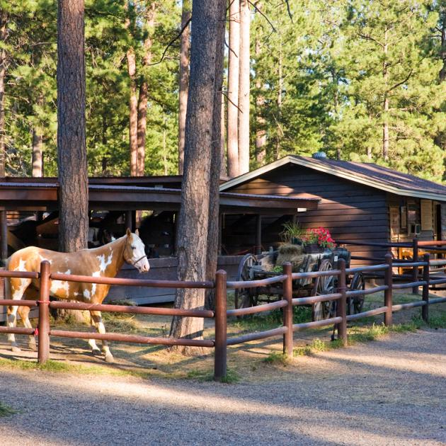 Blue Bell Stables and Trail Rides