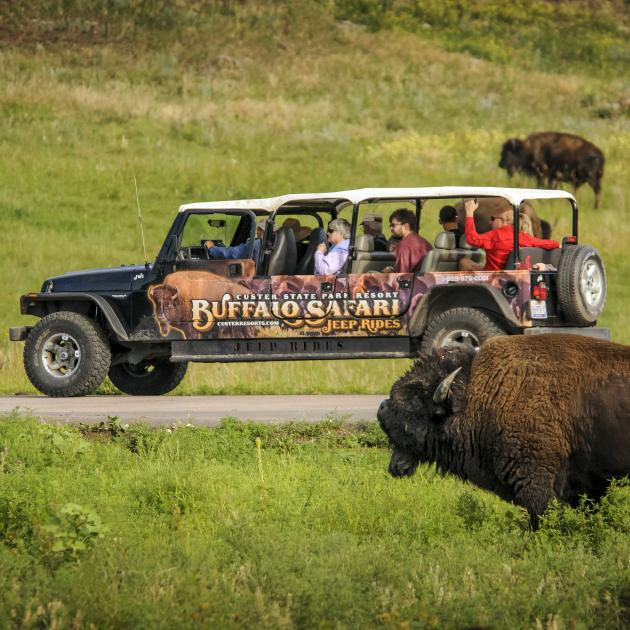 Custer State Park - Buffalo Safari Jeep Rides